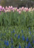 Ogród żarówki fotografia royalty free
