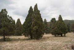Ogród bóg park narodowy Zdjęcie Royalty Free