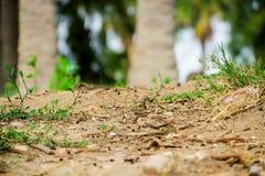 Ogród Bez planet obraz stock