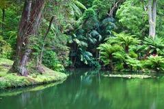 ogród botaniczny Obraz Royalty Free