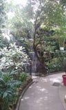 ogród botaniczny obrazy stock