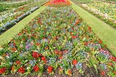 ogród botaniczny Zdjęcia Royalty Free