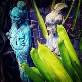 ogród botaniczny Fotografia Stock