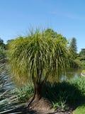 Ogród botaniczny Adelaide w Australia Zdjęcia Royalty Free