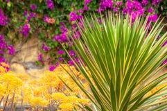 Ogród botaniczny Funchal obrazy stock