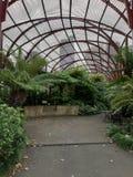ogród botaniczny królewscy zdjęcia stock