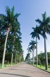 ogród botaniczny palmowi Paulo sao drzewa fotografia royalty free