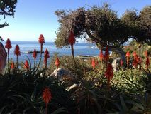Ogród botaniczny plaża Obraz Royalty Free