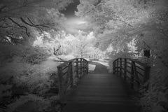 Ogród Botaniczny Pod Ominus Teksas niebem Zdjęcia Royalty Free