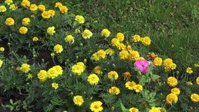 Ogród botaniczny przy Vitebsk zbiory wideo