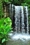 ogród botaniczny siklawa Obraz Royalty Free