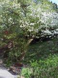 Ogród botaniczny w arboretum WojsÅ 'awice zdjęcie royalty free