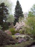 Ogród botaniczny w arboretum WojsÅ 'awice zdjęcia stock