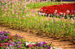 Ogród Botaniczny w Chiangmai Tajlandia Obrazy Stock