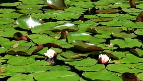 Ogród botaniczny w Gruzja zbiory wideo