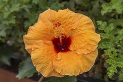 Ogród Botaniczny w Lion Egzot kwitnie w ogródzie botanicznym Obraz Royalty Free