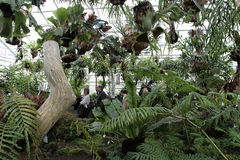 Ogród Botaniczny w Monachium Zdjęcia Royalty Free
