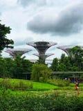 Ogród botaniczny w Singapur fotografia stock