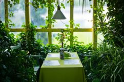 Ogród Botaniczny w Wałbrzyskim, Polska obrazy royalty free