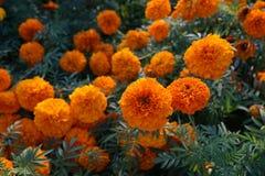 Ogród botaniczny z zielonymi roślinami Zdjęcie Stock