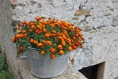 Ogród botaniczny z zielonymi roślinami Fotografia Stock