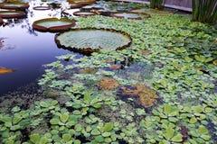 Ogród botaniczny z zielonymi roślinami Zdjęcia Royalty Free