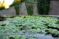 Ogród botaniczny z zielonymi roślinami Obraz Stock