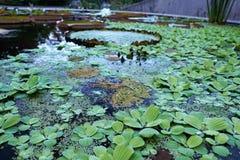 Ogród botaniczny z zielonymi roślinami Obrazy Royalty Free