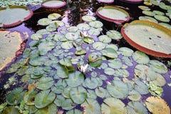 Ogród botaniczny z zielonymi roślinami Zdjęcie Royalty Free