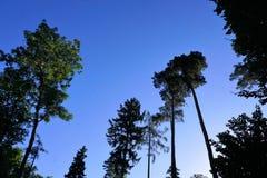 Ogród botaniczny z zielonymi roślinami Obraz Royalty Free