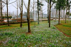 ogród botaniczny Zhengzhou zdjęcia royalty free