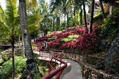 Ogród coleus zdjęcie royalty free