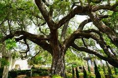 Ogród Cummer muzeum w Jacksonville, Floryda obrazy royalty free