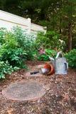 ogród czekanie obraz royalty free