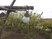 Ogród, drzewa, roślinność, oświetlenie, lampion, kwiatonośni drzewa, farma uprawia ziemię, lampa Zdjęcia Stock