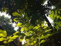 Ogród, drzewo i słońce, Zdjęcia Royalty Free