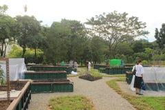 Ogród fabuły w Bishan Ang Mo Kio parku w Singapur Fotografia Royalty Free