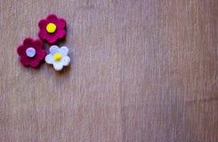Ogród filc kwitnie nad popielatym tłem fotografia stock