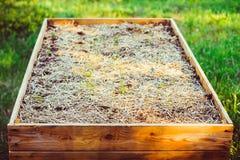 Ogród, flancowanie, ogrodowa łóżkowa wysokość Obrazy Royalty Free