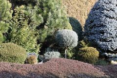 Ogród granicy z conifers i pokryw roślinami Fotografia Stock