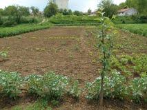 Ogród i pole Zdjęcia Stock