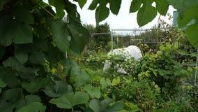 Ogród Ogród jabłka ogrodowego zmielonego żniwa dojrzały czas drzewo posiadania zbiory