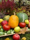 ogród jesienią Fotografia Stock