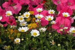 ogród kwiatów Fotografia Royalty Free