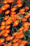 ogród kwiatów Fotografia Stock