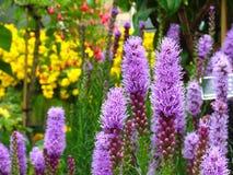 ogród kwiatów Obrazy Royalty Free