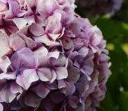 Ogród kwiaty zdjęcie royalty free