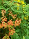 Ogród, kwiaty Zdjęcia Royalty Free