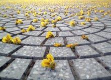 Ogród kwiaty Fotografia Royalty Free