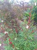 Ogród kwitnie dzikich kwitnących krzaka użyźniacza narzędzia fotografia royalty free